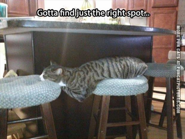 The cat just found the right spot