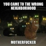 Don't mess with these cats
