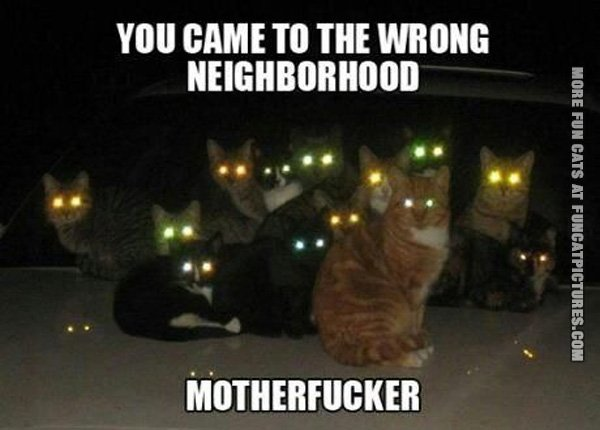 funny-cat-pics-wrong-neighborhod