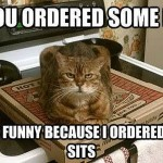 The cat ordered some sits