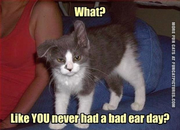 Cat with a bad ear day