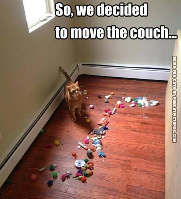 The cat found his toys