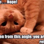 Cat finds you retarded from every angle