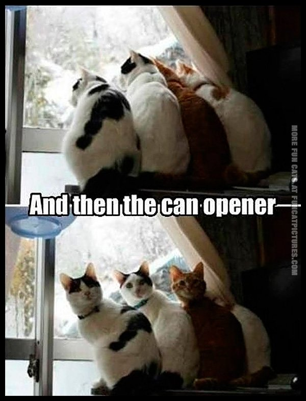 And suddenly, a can opener