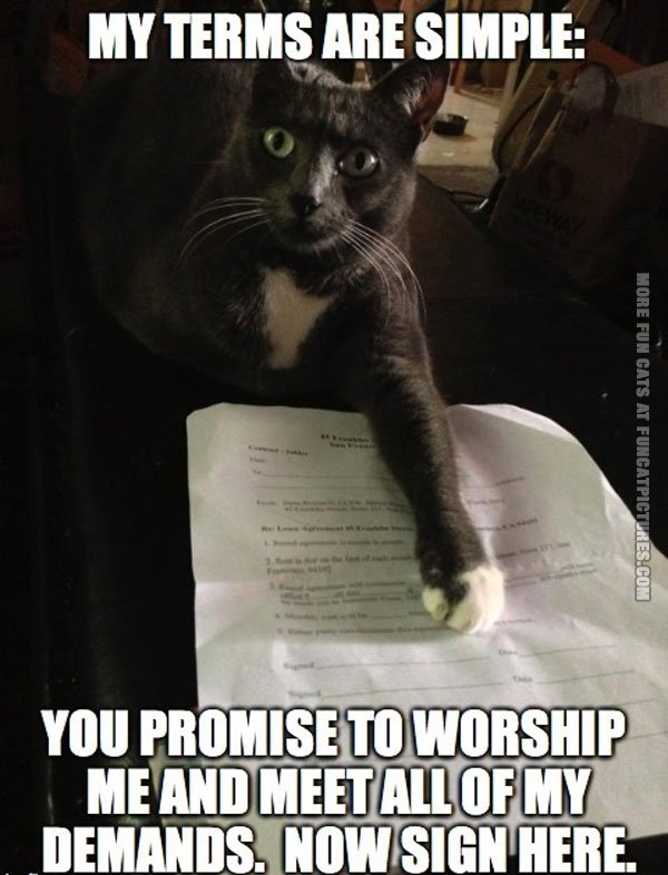 Cats terms are simple