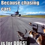 Chasing cars is for dogs