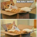 How to improve a cats day