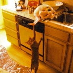 A helping cat
