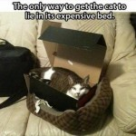 How to get a cat to lie in an expensive bed