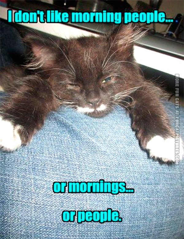 Obviously not a morning cat