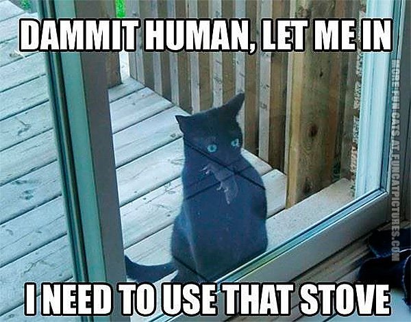 funny-cat-pics-i-need-to-use-that-stove