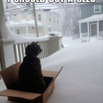 Cat should buy a sled