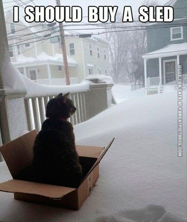 funny-cat-pics-i-should-buy-a-sled