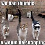 If cats had thumbs