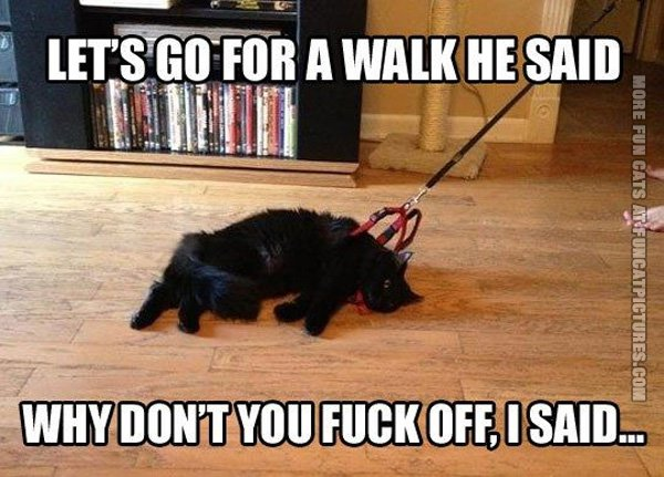 How to walk a cat in a leash