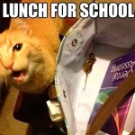 When cats is packing the lunch