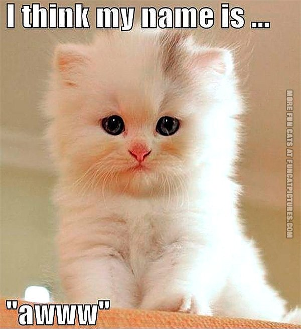 Cat with a cute name