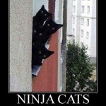 Living next door to ninja cats