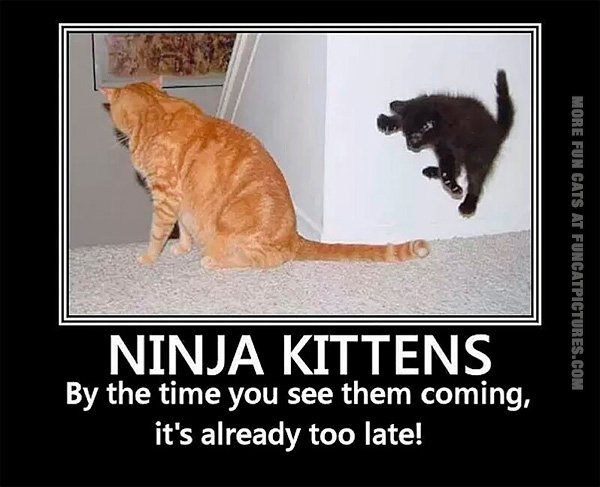 Beware of ninja kittens