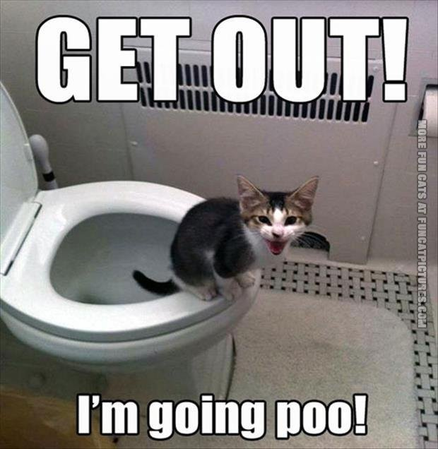 Cat on the toilet
