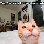 Cat is ready for the video conference