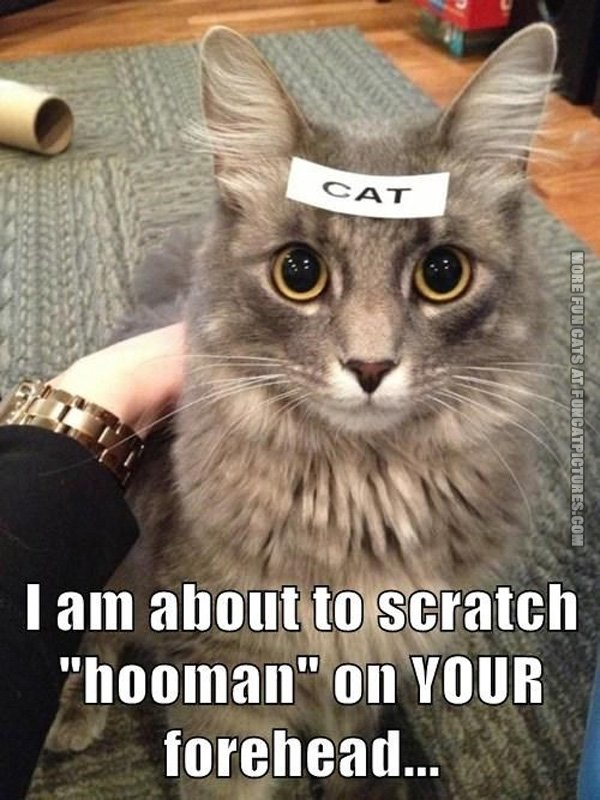 funny-cat-pics-scratch-human-in-your-forhead