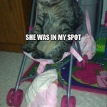 Not smart to take the cats spot