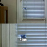 Cat looks through the curtains