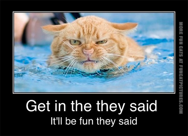 Swimming cat is not amused