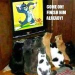 Cats watching Tom & Jerry