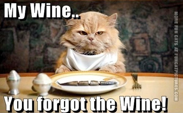 funny-cat-pics-you-forgot-the-wine
