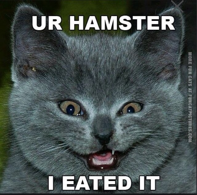 Cat ate the hamster