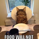 Cat wants to be served