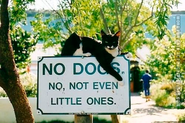 The cat probably made this sign