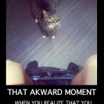 That awkward moment when you realize you don't have a cat