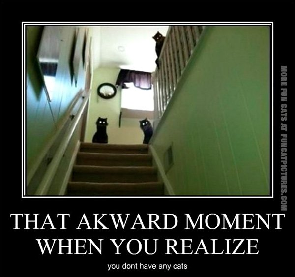 funy-cat-pics-that-awkward-moment-when-you-realize-you-dont-have-any-cats