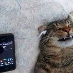 Music loving cat