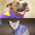New sweater: Dog VS Cat