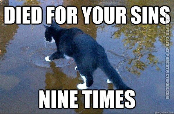 Jesus cat walking on water