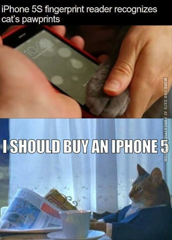 Why cat's need the newy iPhone 5
