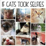 If cats took selfies