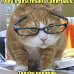 Smart cat with glasses