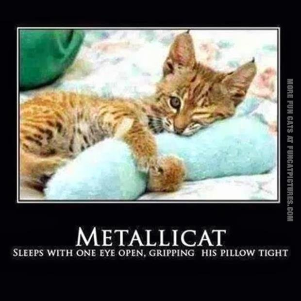 Meet Metallicat