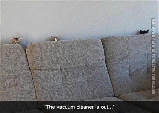 Some cats are afraid of vacuum cleaners