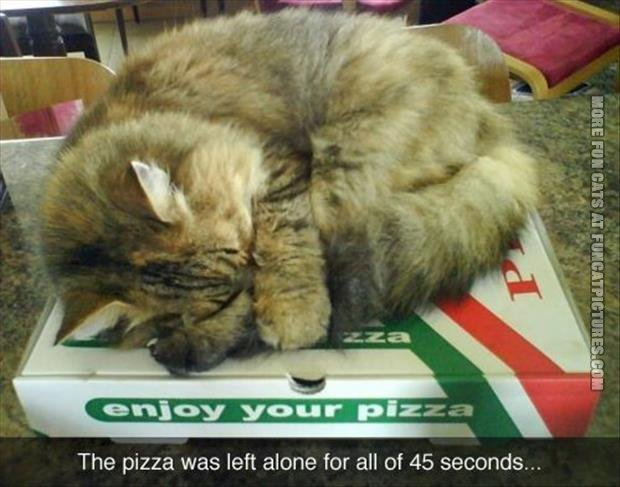 Never leave the pizza with the cat