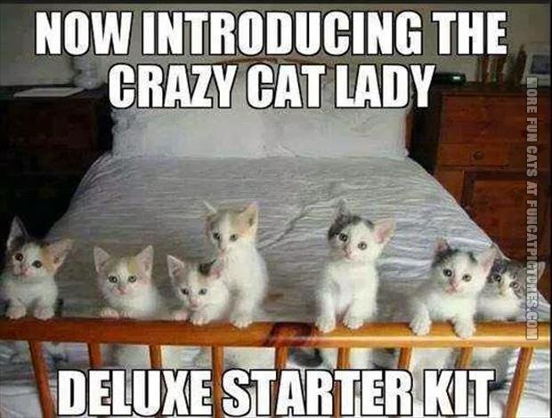 Crazy Cat Lady Deluxe Starter Kit