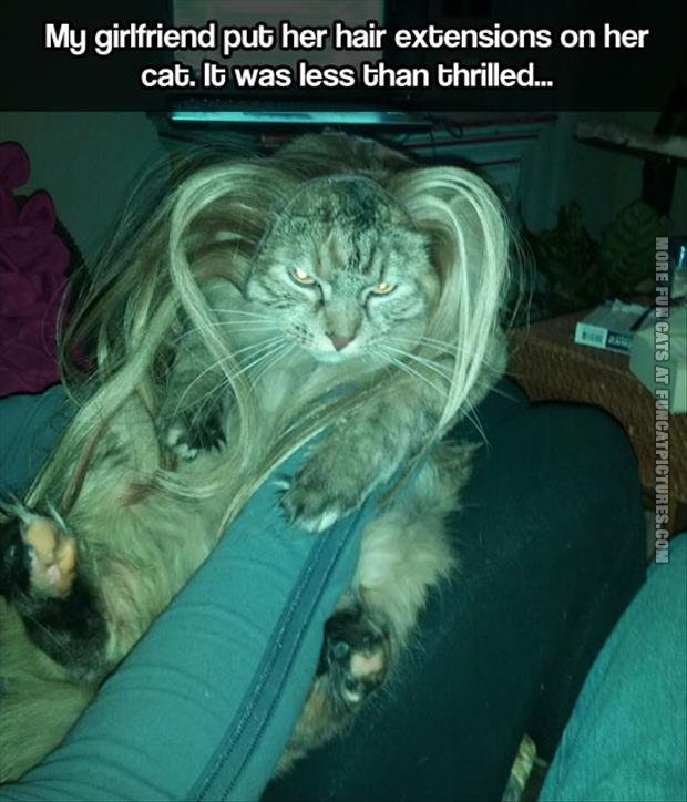 Hair extentions on a cat