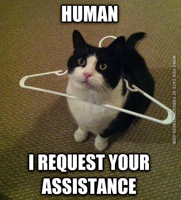 Cat needs assistance