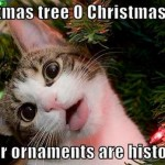 Cat sings christmas song