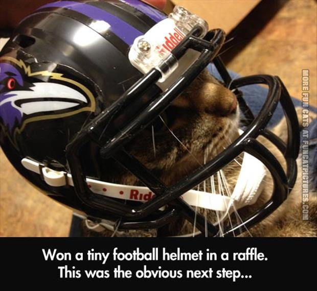 Cat in a tiny football helmet